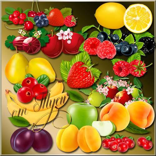 Клипарт - Сочные ягоды и нежные фрукты