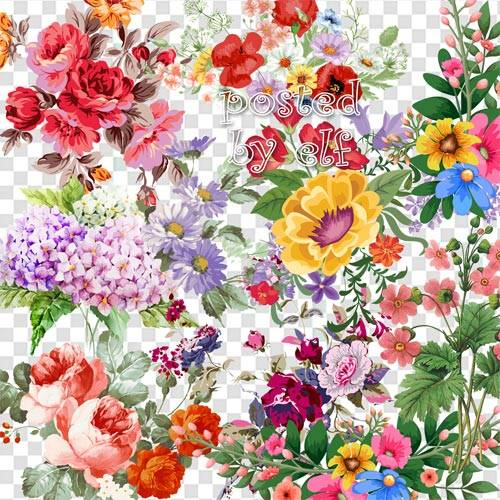 Цветы чисты, красивы и невинны - клипарт без фона
