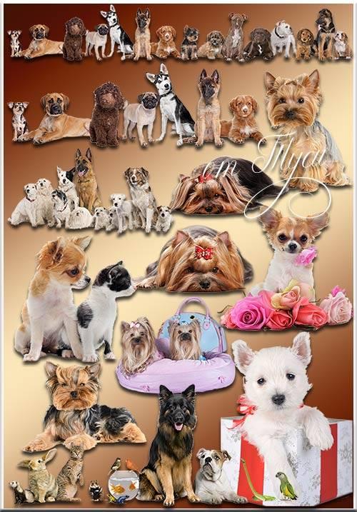 Забавные животные - Клипарт / Funny Animals - Clipart