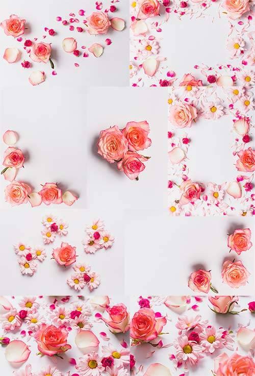 Прекрасные розы - Клипарт / Beautiful roses - Clipart