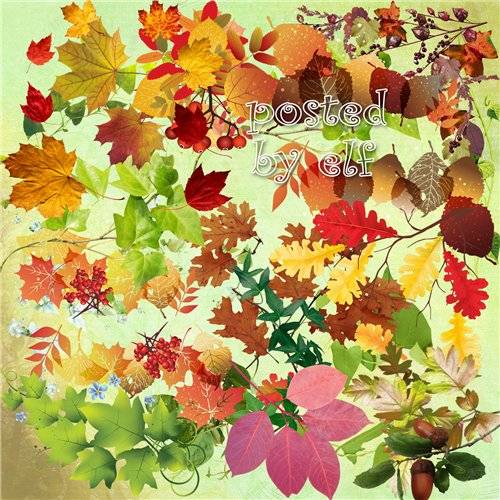 Осенние листья, плетущаяся зелень, ветки в png