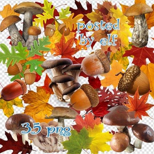 Осенние листья, грибы, желуди в png