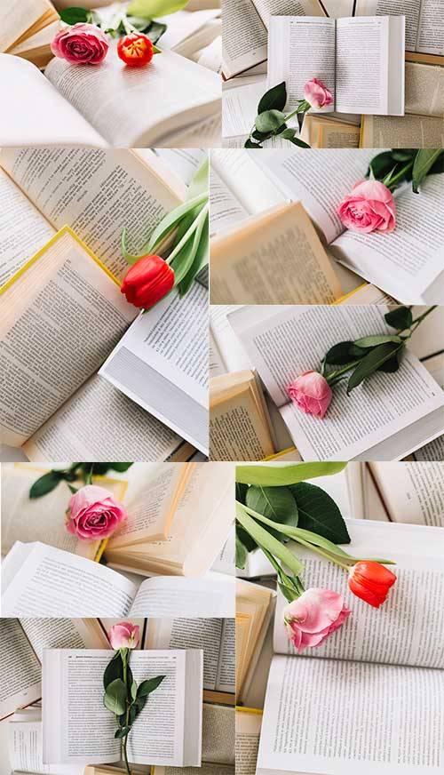 Тюльпан в раскрытой книге - Клипарт / Tulip in an open book - Clipart