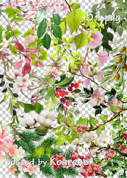 Tree branches, flowers, leaves png - Ветки деревьев, цветы, листья на прозр ...