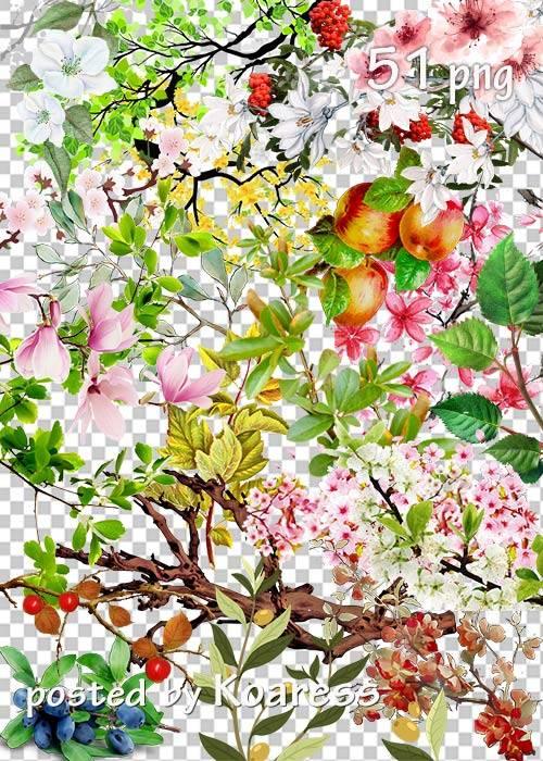 Tree branches, flowers, leaves png part 2 - Ветки деревьев, цветы, листья в ...