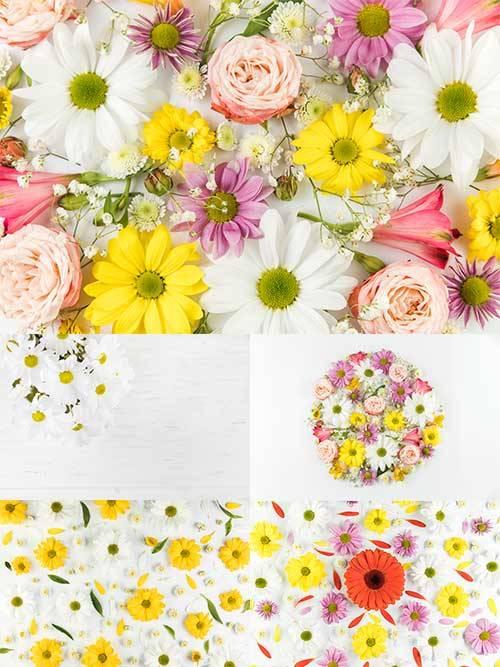 Фоны с цветами / Backgrounds with flowers