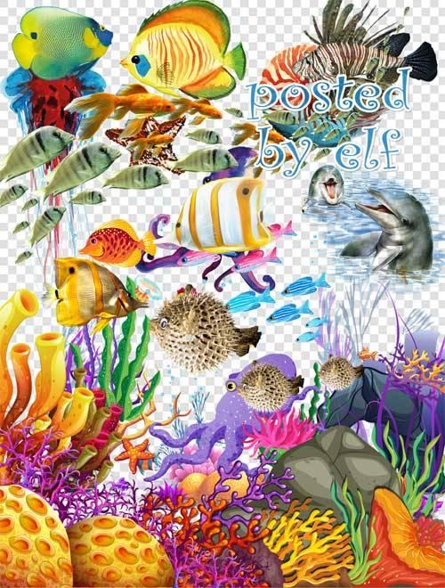 Морской клипарт png для дизайна
