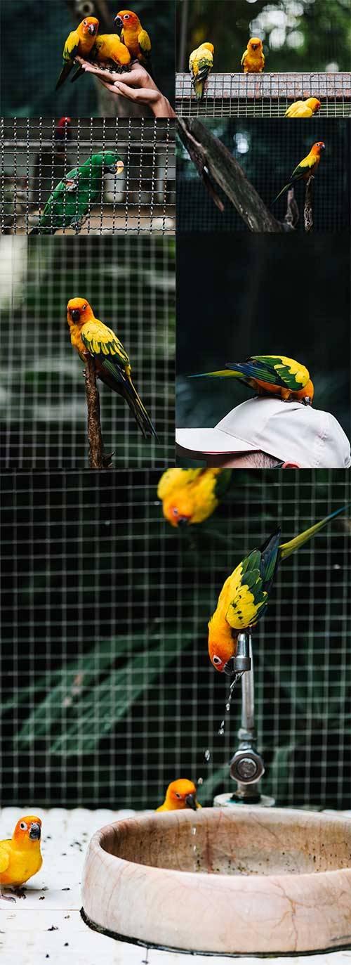 Попугаи - Растровый клипарт